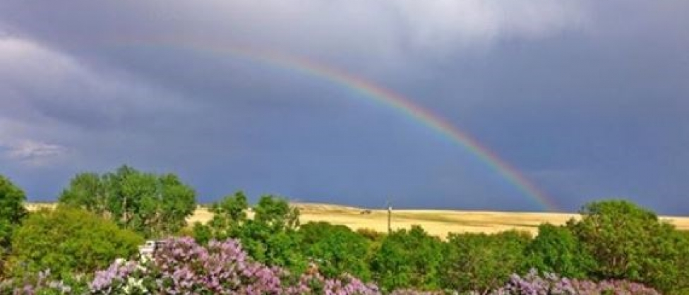 lilacs and rainbow-2